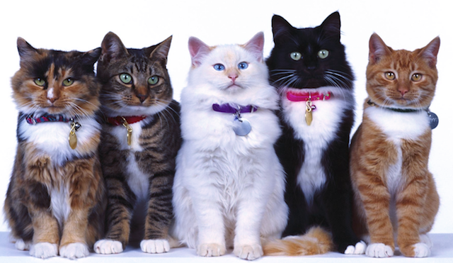 group_cats