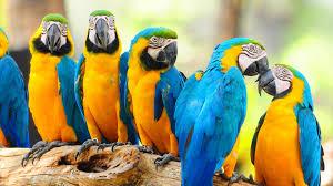 group_parrots